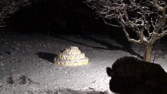 Fotograma del vídeo In Praise of the Beast (El elogio de la bestia) de Greta Alfaro.